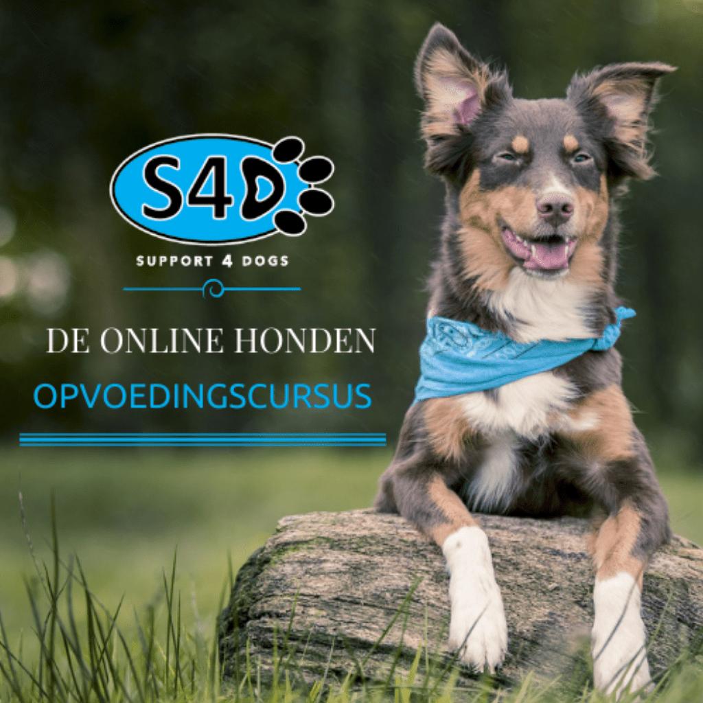 De Online Honden Opvoedingscursus