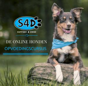 Online Honden Opvoedingscursus